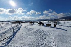 Jahanje-ranch-terra-26
